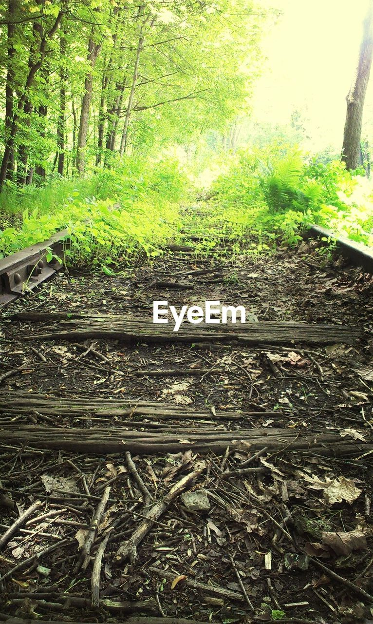 forest, railroad track, nature, tree, rail transportation, no people, day, outdoors, growth