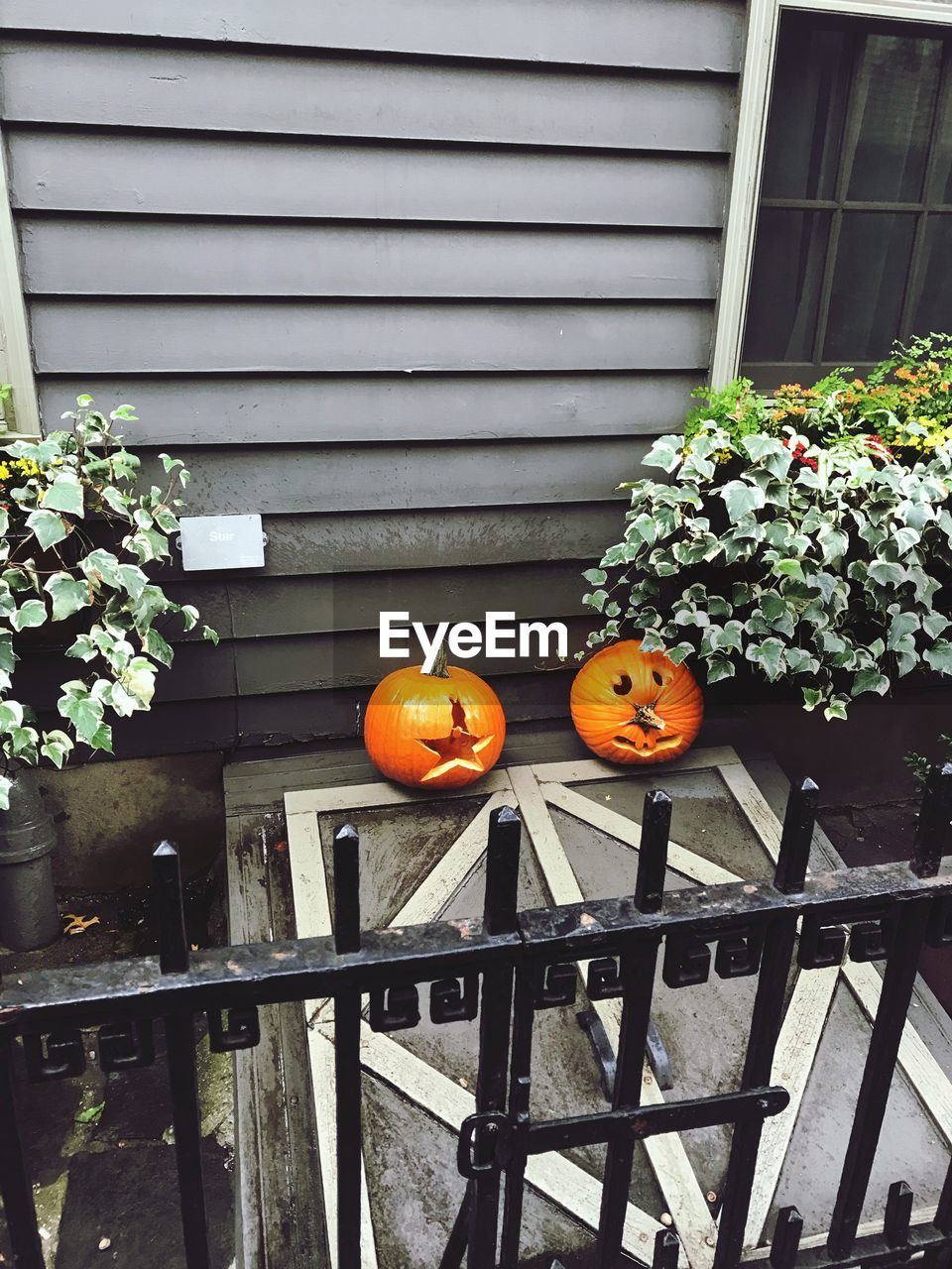 plant, no people, built structure, day, architecture, nature, building exterior, pumpkin, outdoors, growth, freshness, railing, food, flower, halloween, orange color, food and drink, flowering plant, celebration, potted plant, flower pot