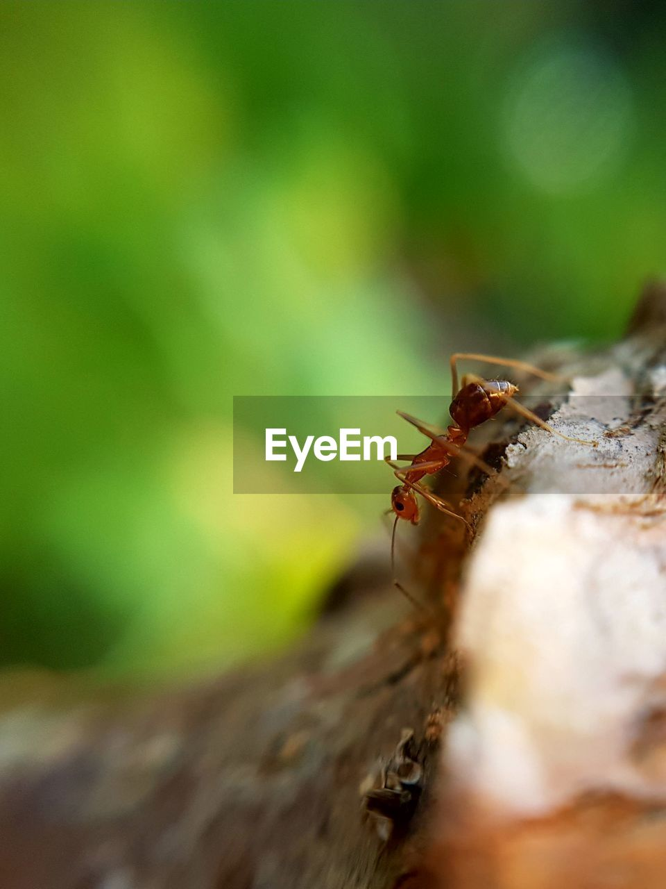 insect, animals in the wild, animal themes, one animal, selective focus, close-up, nature, animal wildlife, outdoors, no people, day