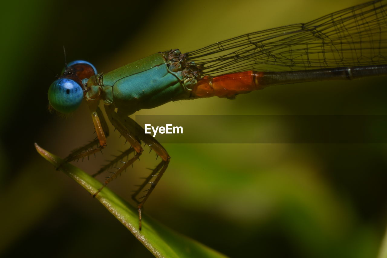 insect, animal themes, animals in the wild, green color, focus on foreground, animal wildlife, damselfly, one animal, close-up, no people, outdoors, nature, day