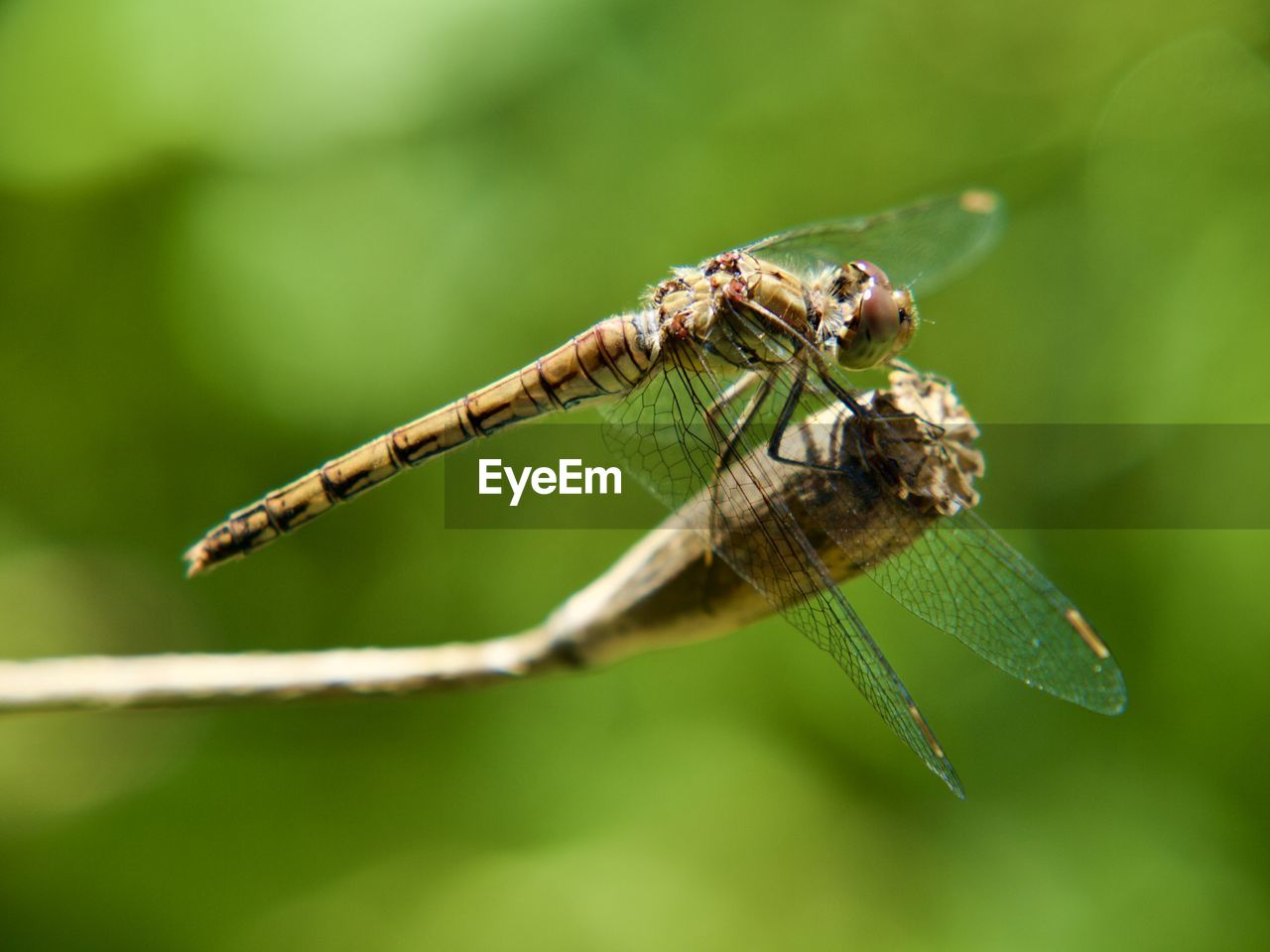insect, invertebrate, animals in the wild, animal wildlife, animal themes, animal, one animal, close-up, animal wing, plant part, leaf, green color, focus on foreground, no people, selective focus, nature, plant, day, zoology, dragonfly, animal eye