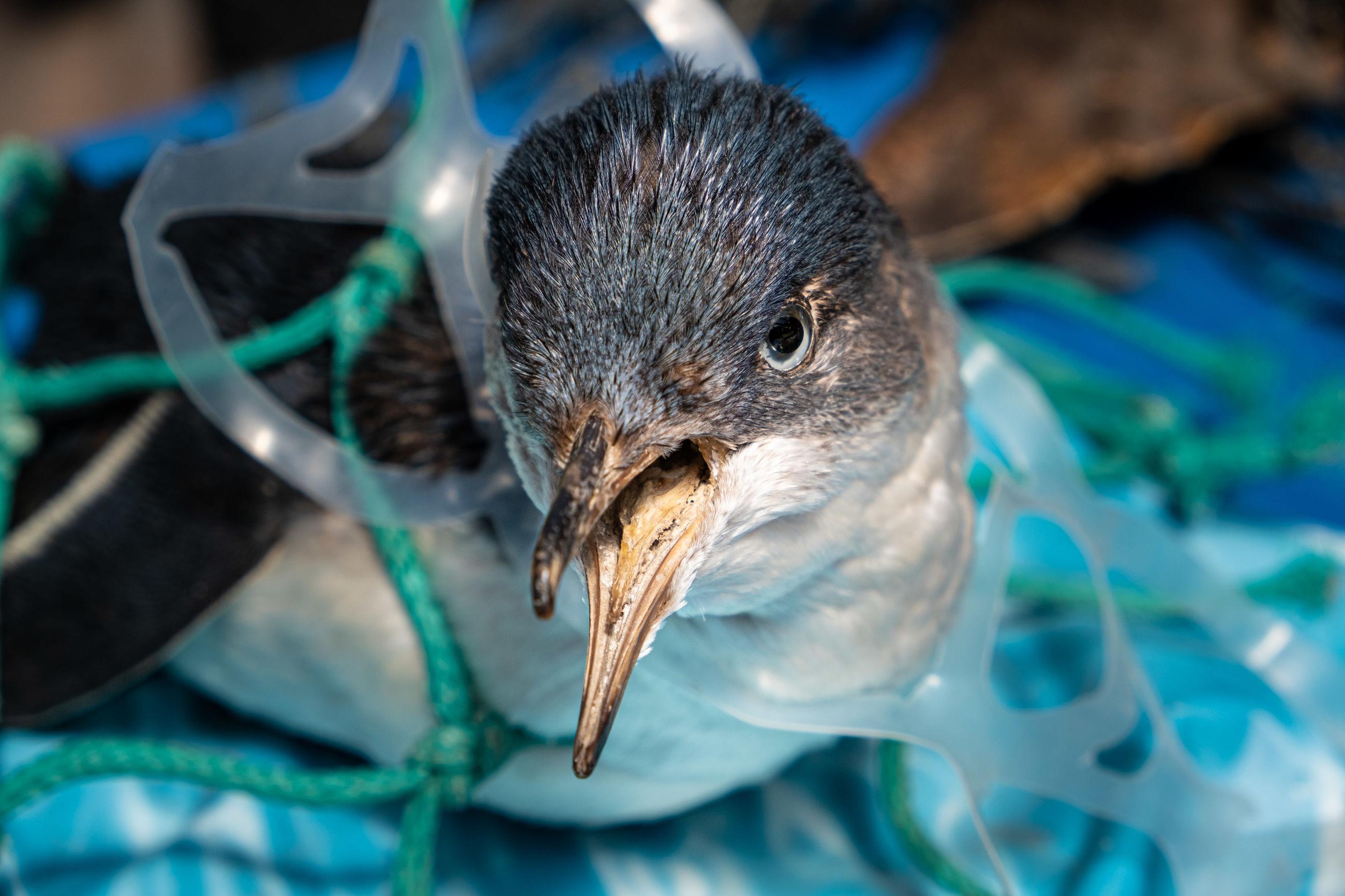 Close-up of bird in plastic garbage