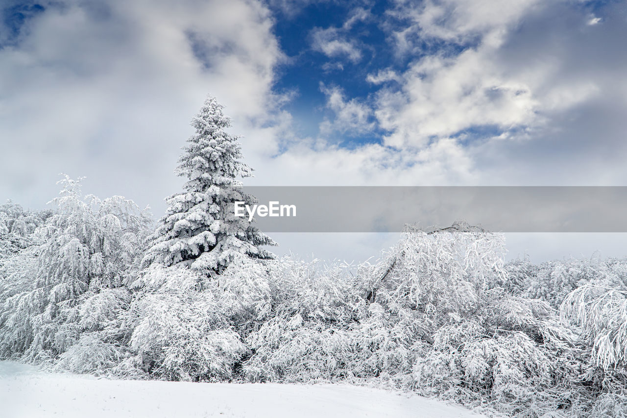 winter, cold temperature, cloud - sky, snow, beauty in nature, sky, tranquility, tree, plant, tranquil scene, day, scenics - nature, white color, nature, no people, non-urban scene, environment, covering, landscape, coniferous tree, fir tree