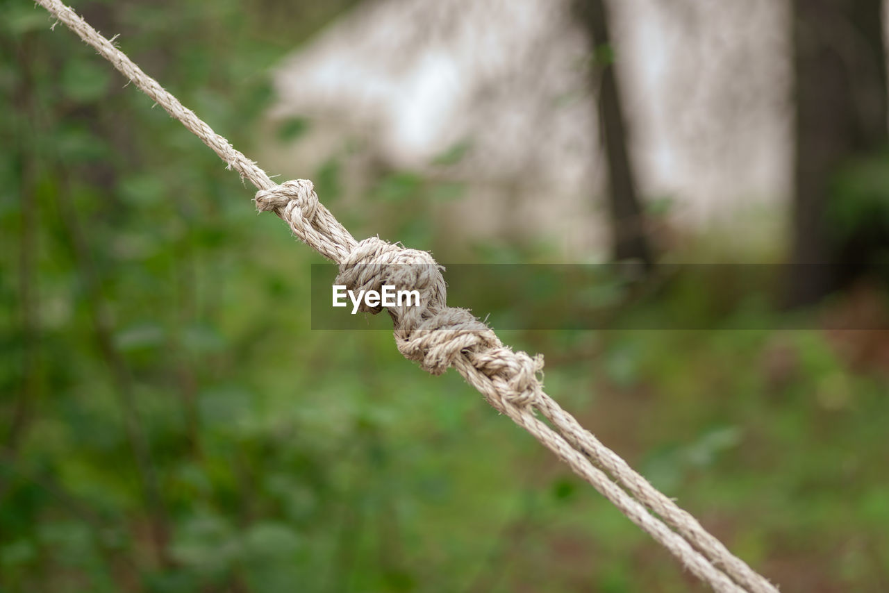 CLOSE-UP OF ROPE TIED UP ON TREE