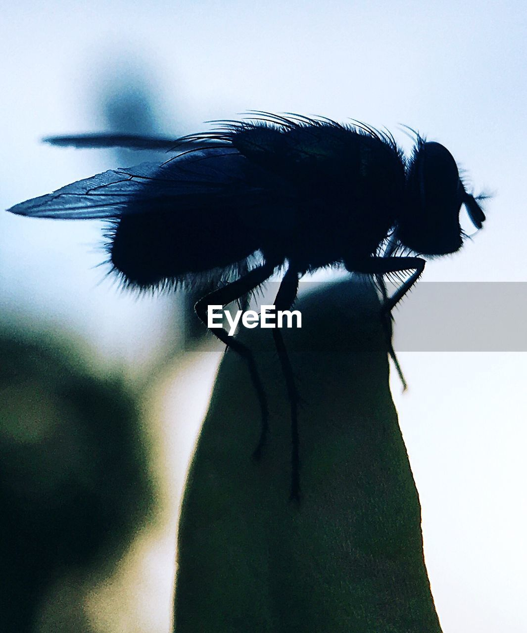 animal themes, insect, invertebrate, animal, one animal, animals in the wild, close-up, no people, nature, animal wildlife, focus on foreground, day, outdoors, sky, plant, black color, animal body part, animal wing, beauty in nature, growth
