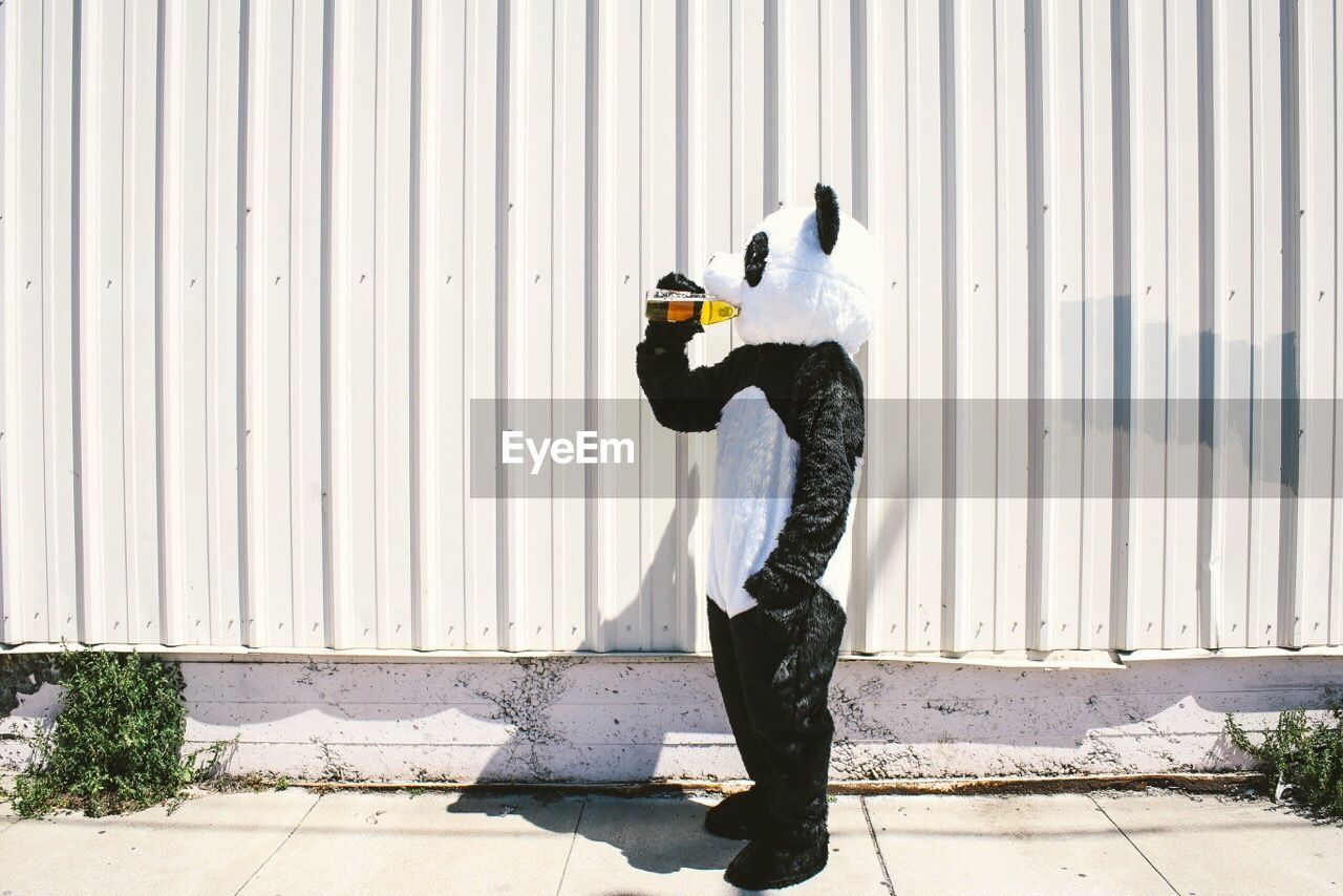 Person In Panda Costume Drinking While Standing On Sidewalk