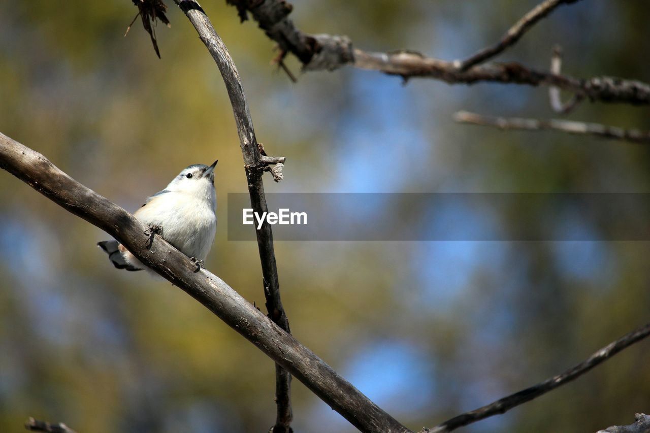 bird, vertebrate, animal themes, animal, branch, perching, tree, animal wildlife, animals in the wild, low angle view, plant, focus on foreground, one animal, no people, nature, day, outdoors, bare tree, beauty in nature, close-up
