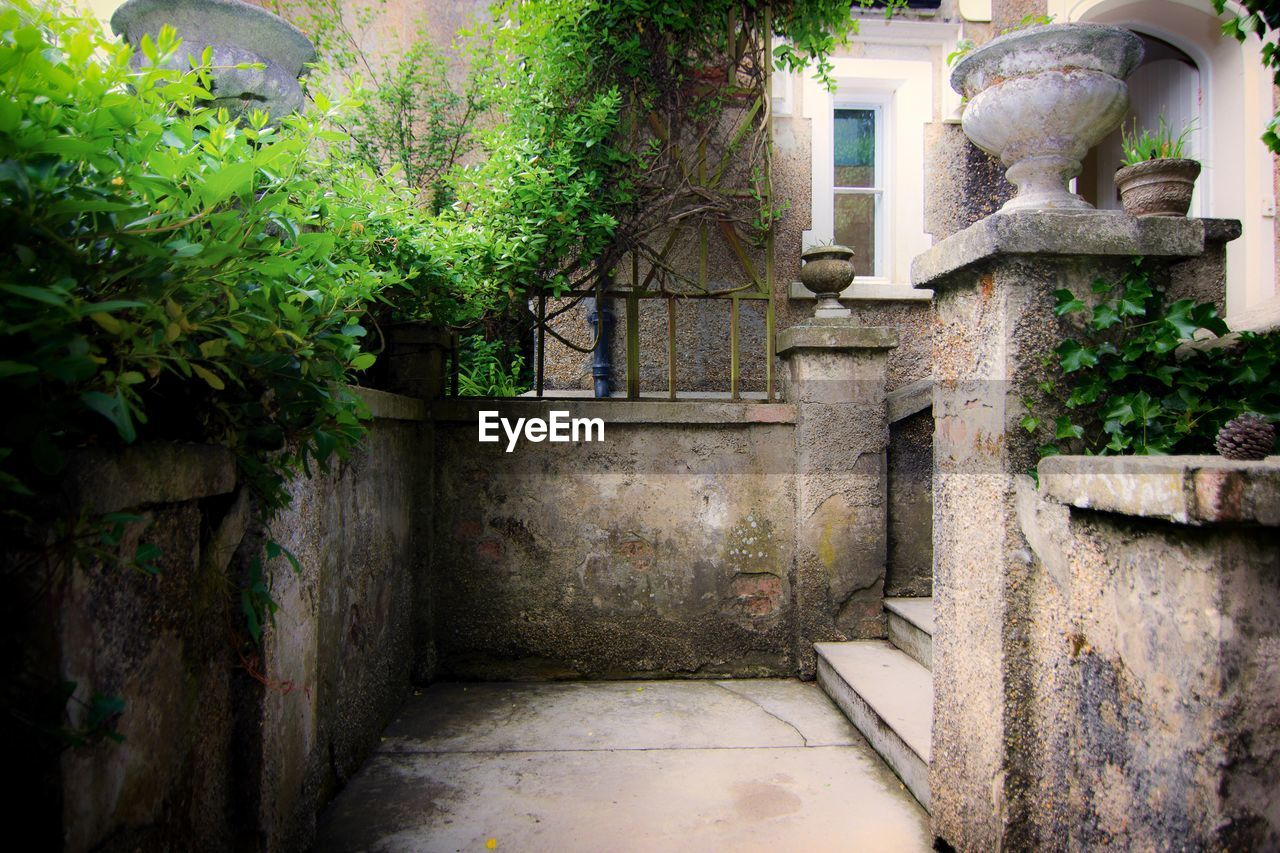 architecture, plant, built structure, building, no people, building exterior, growth, day, tree, house, nature, outdoors, wall, residential district, old, potted plant, wall - building feature, front or back yard, green color, entrance, alley