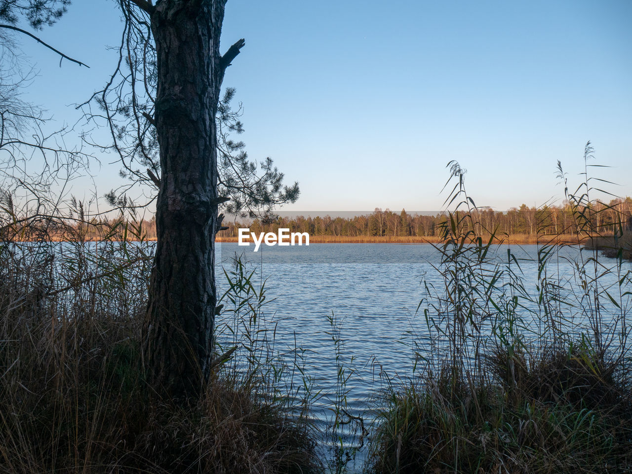 plant, water, sky, tree, tranquility, scenics - nature, tranquil scene, beauty in nature, lake, nature, growth, no people, day, clear sky, non-urban scene, grass, trunk, tree trunk, land, outdoors