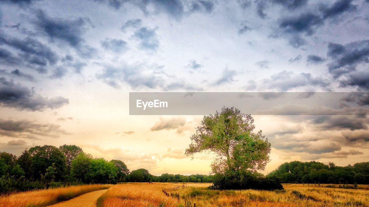 sky, cloud - sky, plant, tranquil scene, tranquility, tree, landscape, beauty in nature, field, scenics - nature, environment, land, growth, nature, non-urban scene, no people, day, grass, rural scene, outdoors
