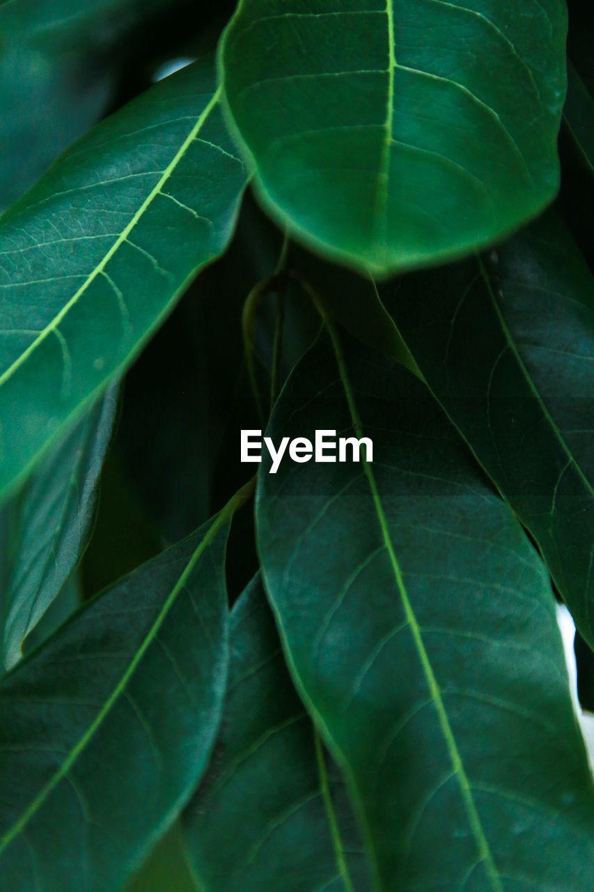 leaf, green color, nature, close-up, plant, growth, no people, outdoors, beauty in nature, day, fragility, freshness