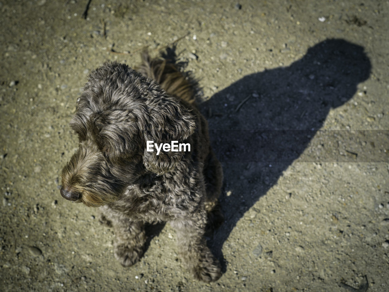 mammal, one animal, animal themes, canine, dog, domestic, pets, domestic animals, animal, high angle view, shadow, sunlight, no people, puppy, day, city, vertebrate, young animal, nature, street, small