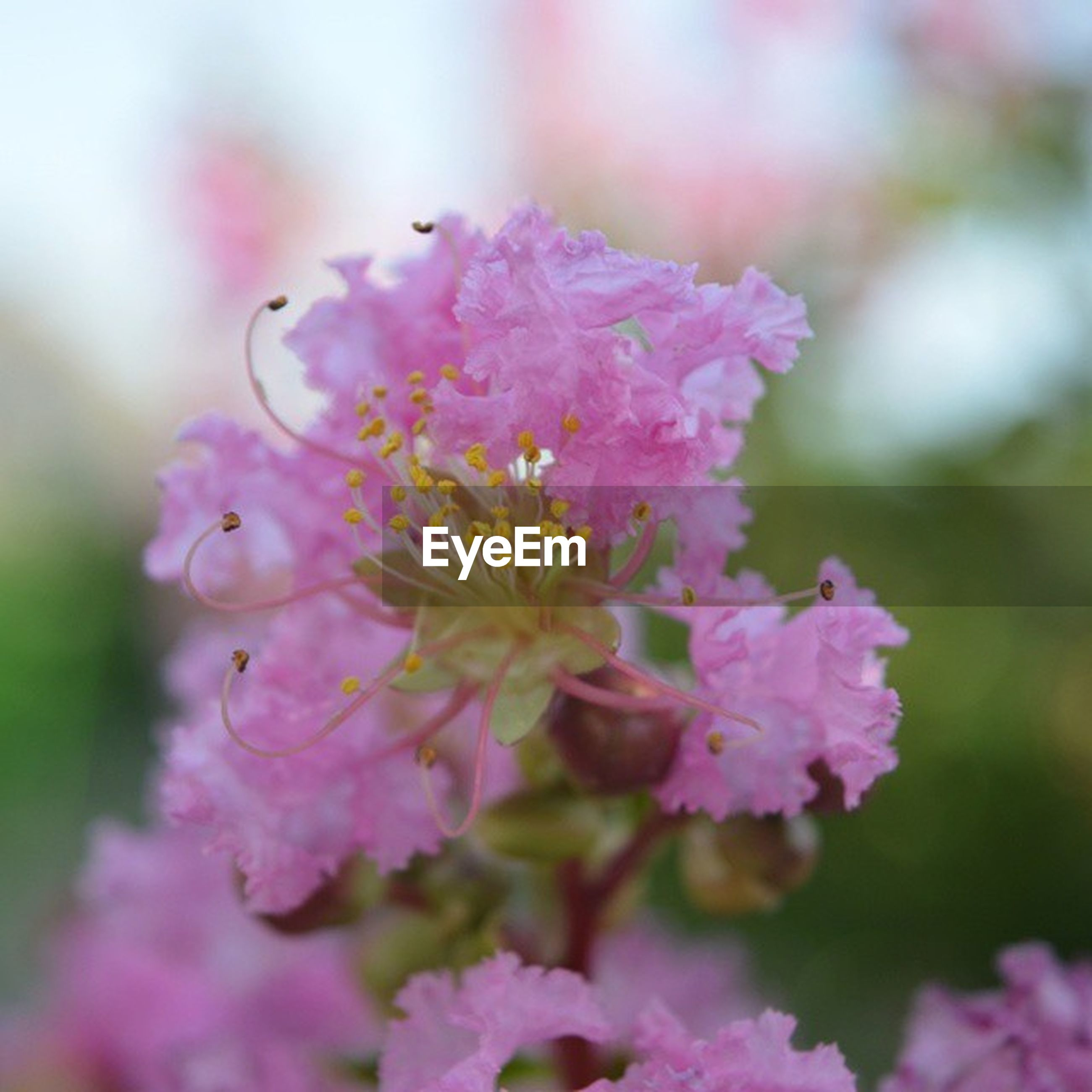 flower, freshness, fragility, pink color, petal, growth, focus on foreground, beauty in nature, close-up, flower head, nature, blooming, selective focus, plant, in bloom, blossom, bud, park - man made space, day, pink