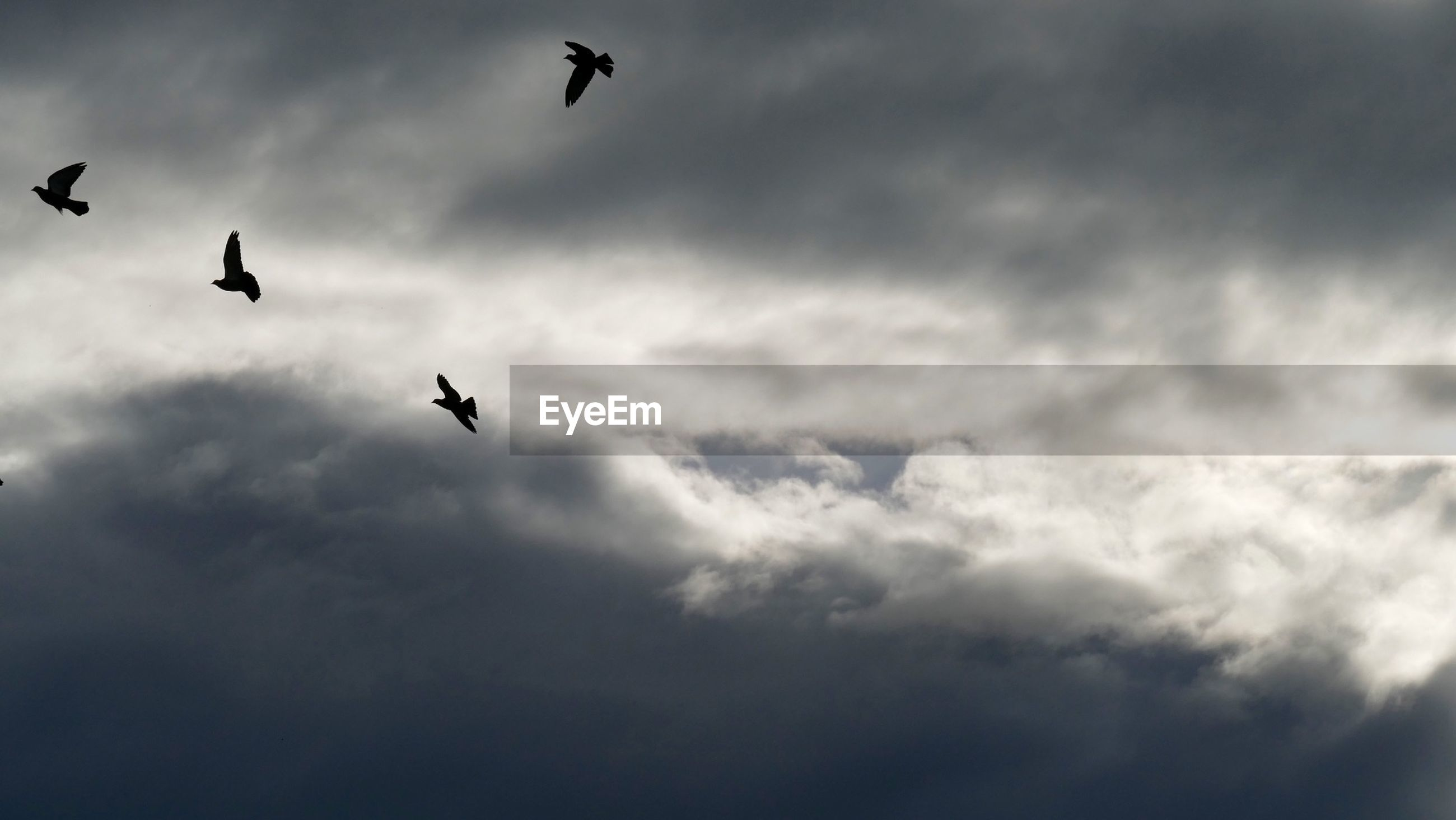 Silhouette birds flying against cloudy sky