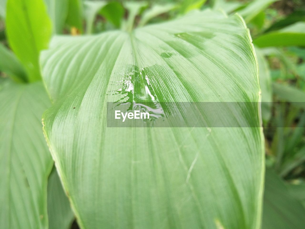 green color, close-up, leaf, plant part, growth, plant, no people, focus on foreground, nature, day, freshness, selective focus, outdoors, beauty in nature, drop, invertebrate, food and drink, wet, insect, leaves