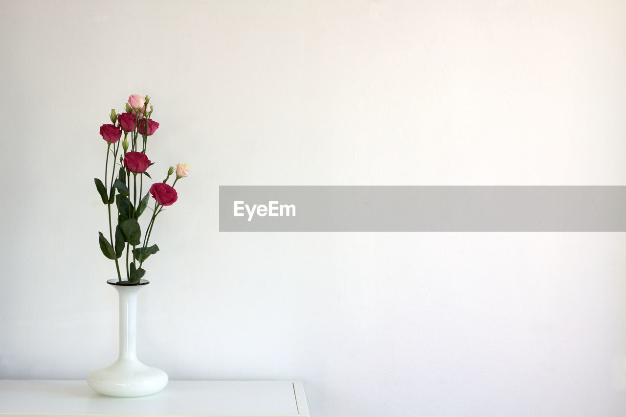 flower, copy space, vase, white color, no people, table, indoors, freshness, beauty in nature, plant, nature, fragility, growth, flower head, leaf, close-up, white background, day