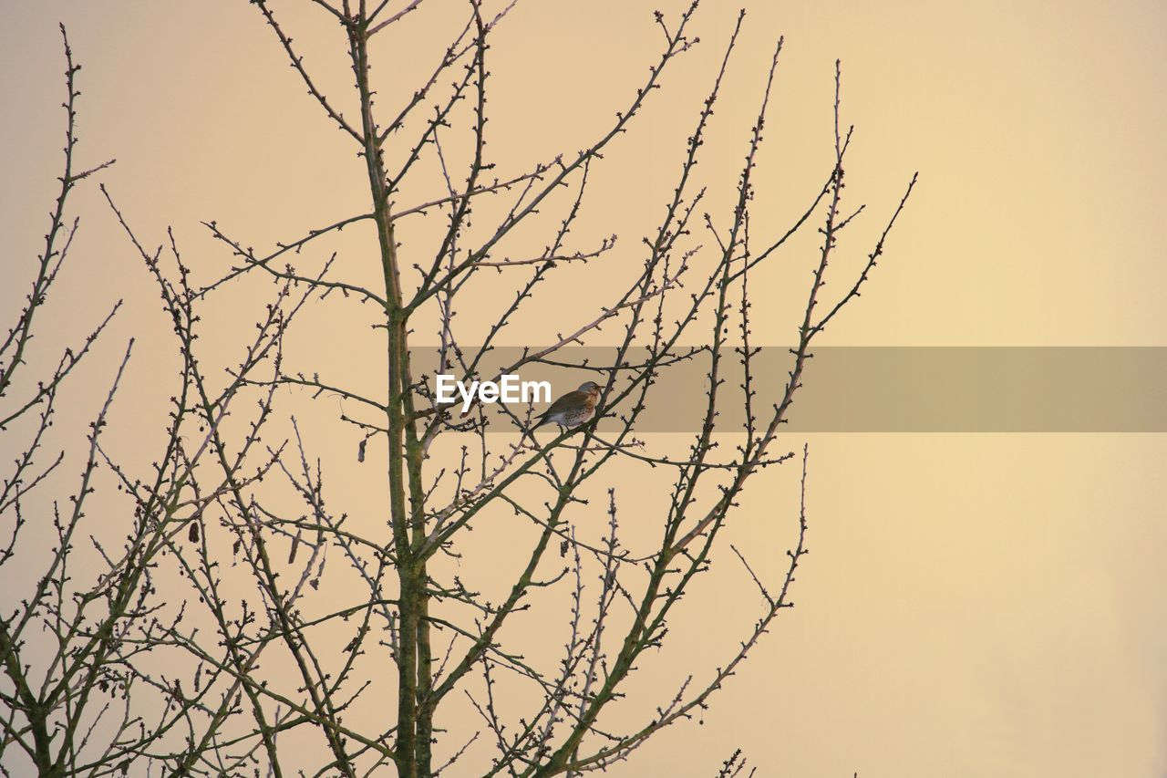 nature, beauty in nature, tranquility, branch, outdoors, no people, bare tree, low angle view, growth, day, sunset, clear sky, sky