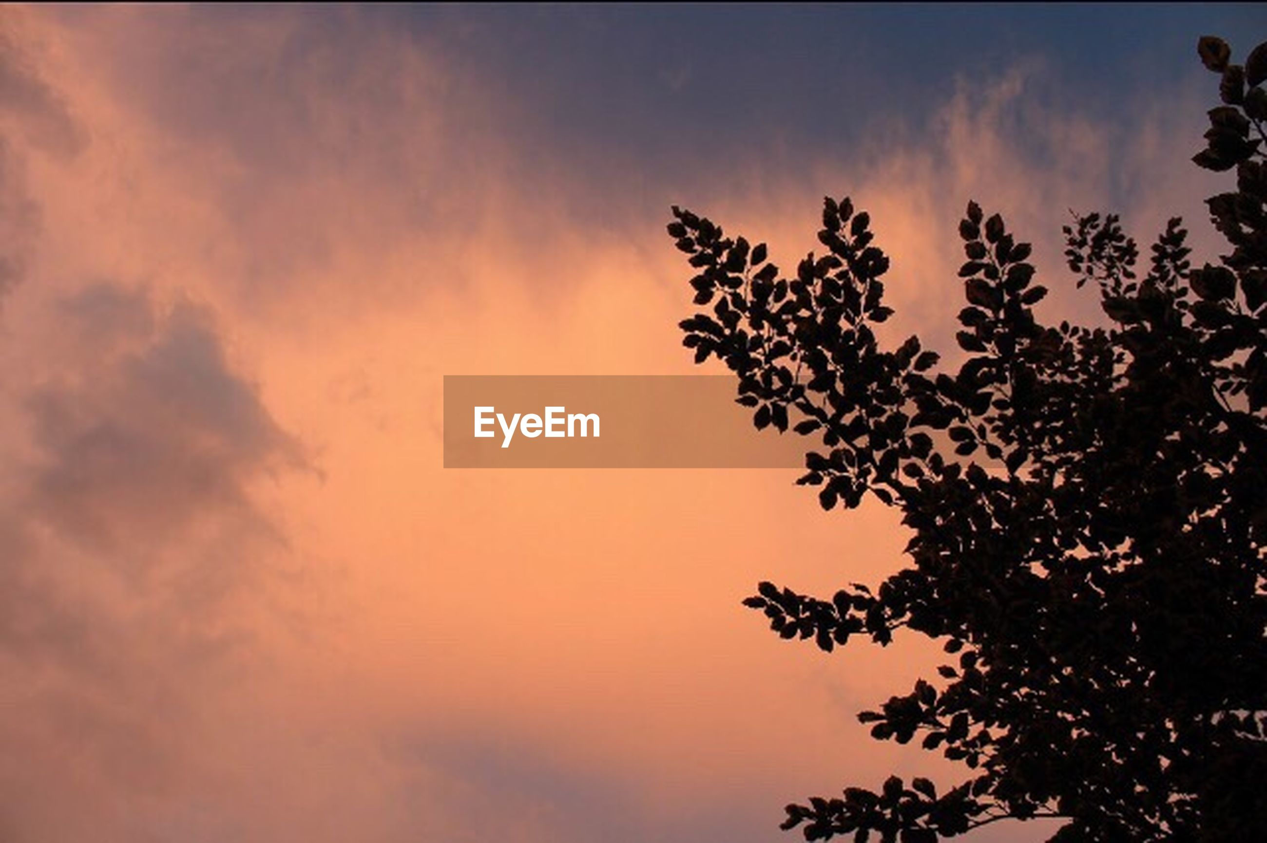 low angle view, sky, tree, beauty in nature, cloud - sky, tranquility, nature, scenics, growth, silhouette, branch, cloudy, tranquil scene, cloud, sunset, outdoors, idyllic, high section, no people, overcast