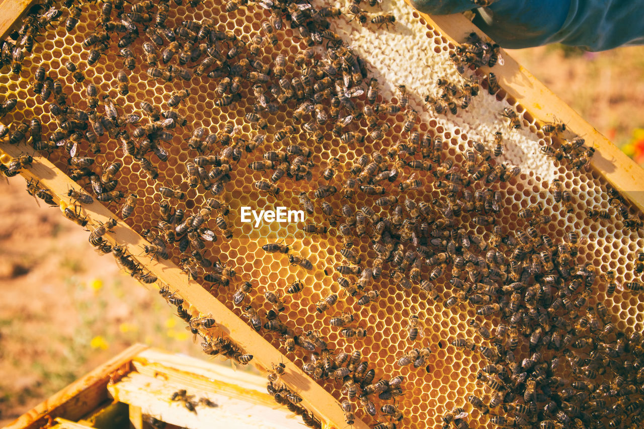 Close-up of bee on hive