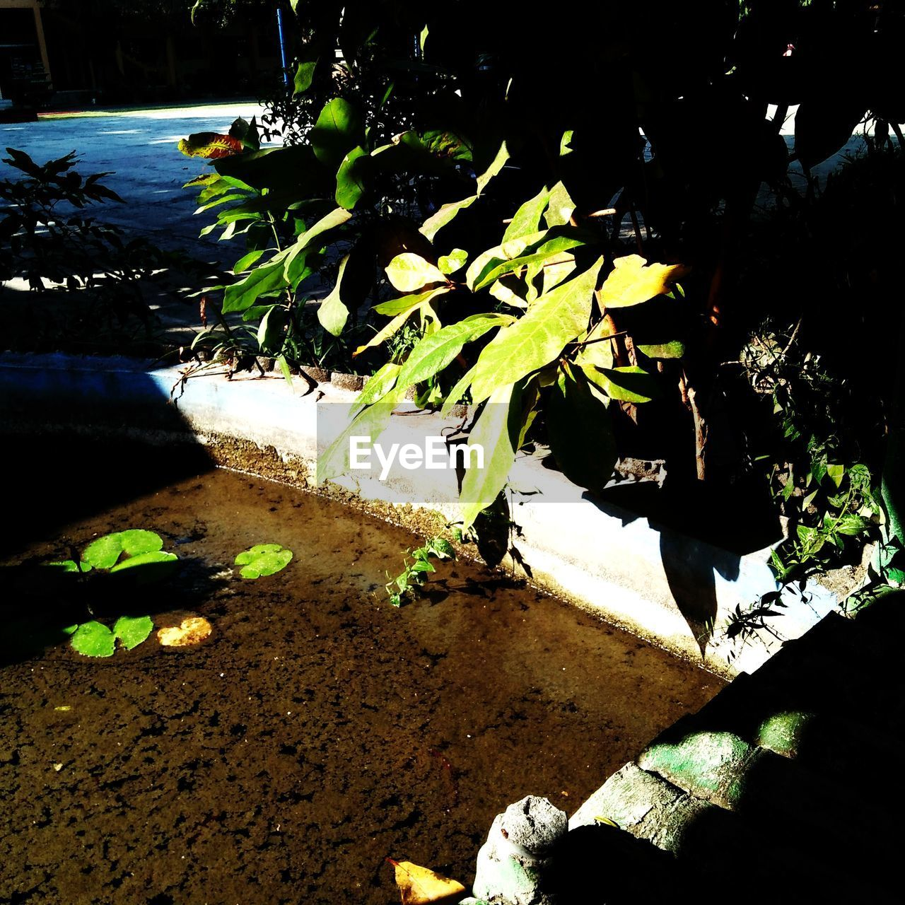 nature, sunlight, plant, shadow, water, no people, leaf, plant part, outdoors, growth, high angle view, beauty in nature, lake, land, tranquility, dirt, field