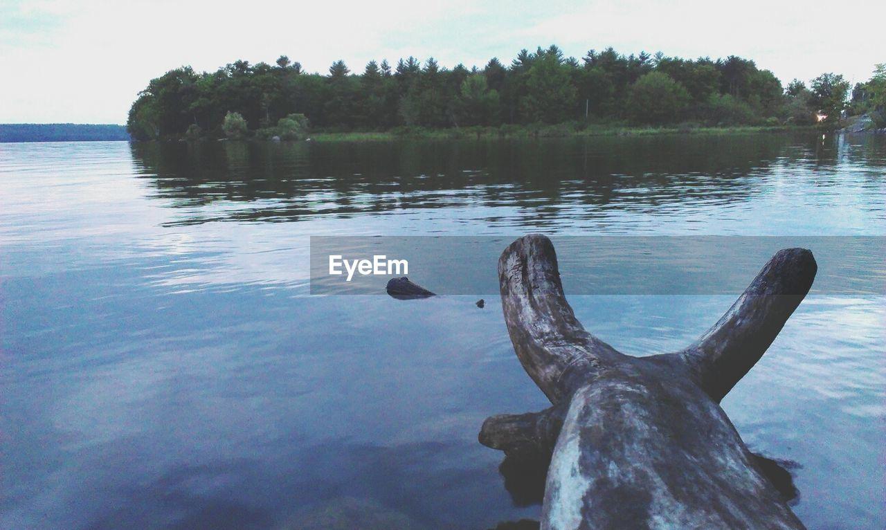 Scenic shot of log in calm lake