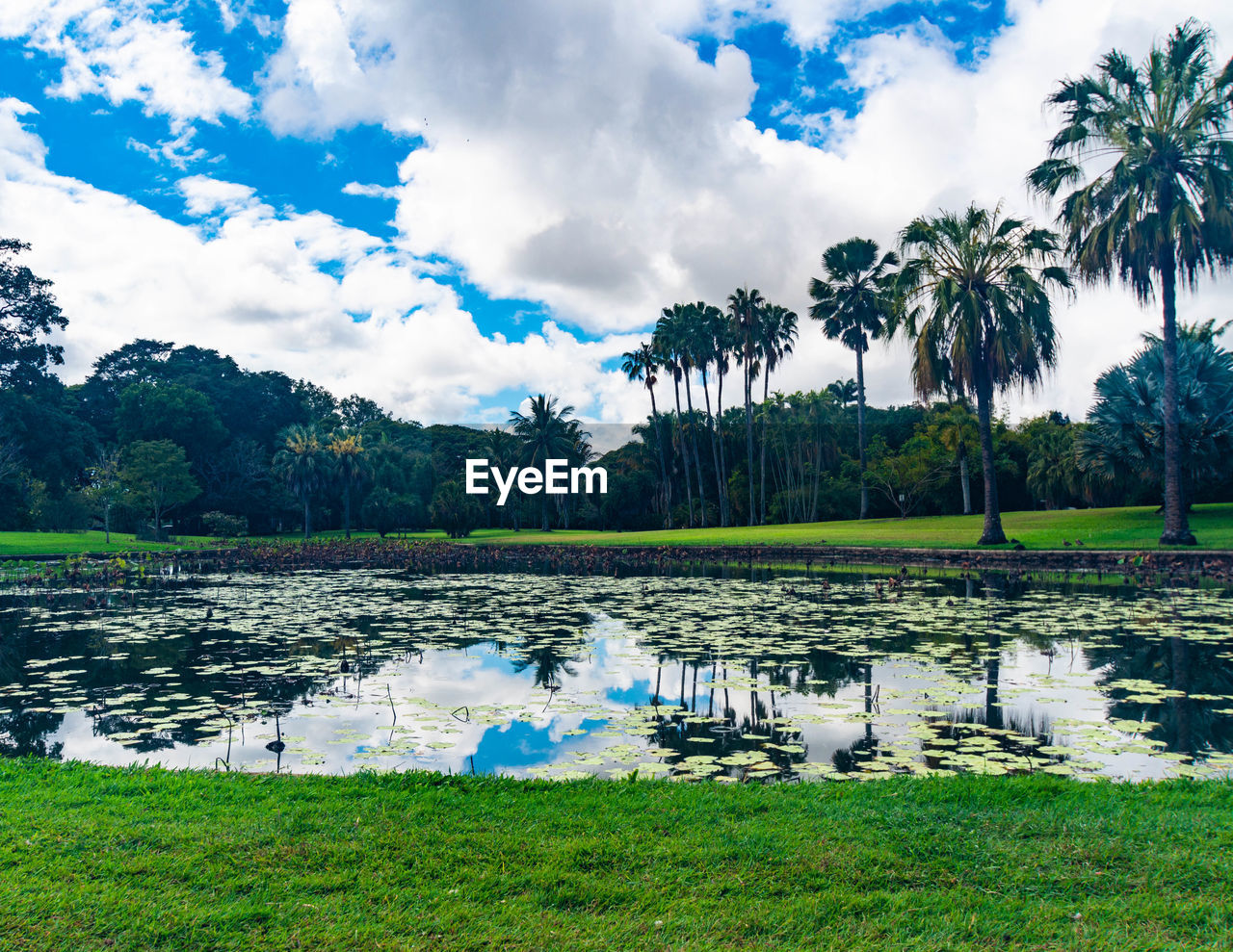 plant, water, sky, cloud - sky, tree, lake, nature, scenics - nature, tranquil scene, beauty in nature, reflection, grass, tranquility, day, palm tree, green color, growth, tropical climate, no people, outdoors, floating on water