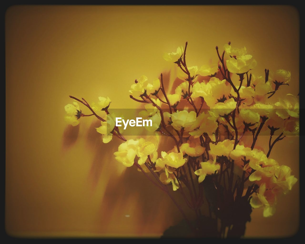 flower, yellow, freshness, fragility, petal, nature, growth, beauty in nature, blossom, no people, flower head, close-up, outdoors, day