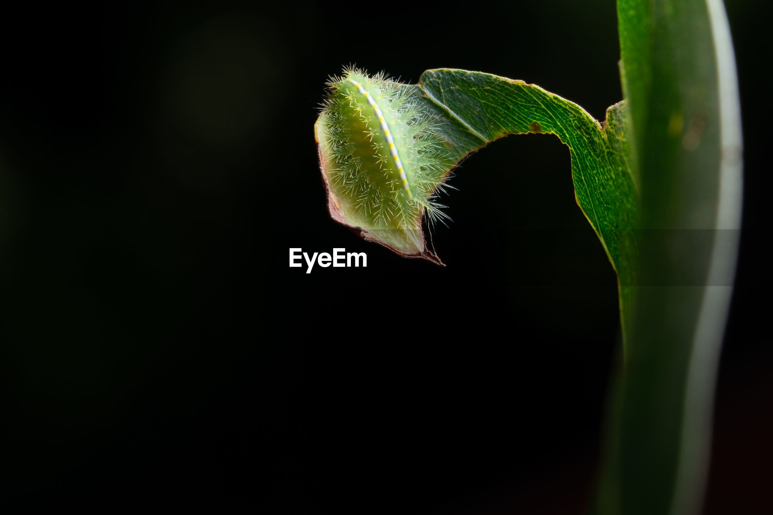 Close-up of insect on plant at night