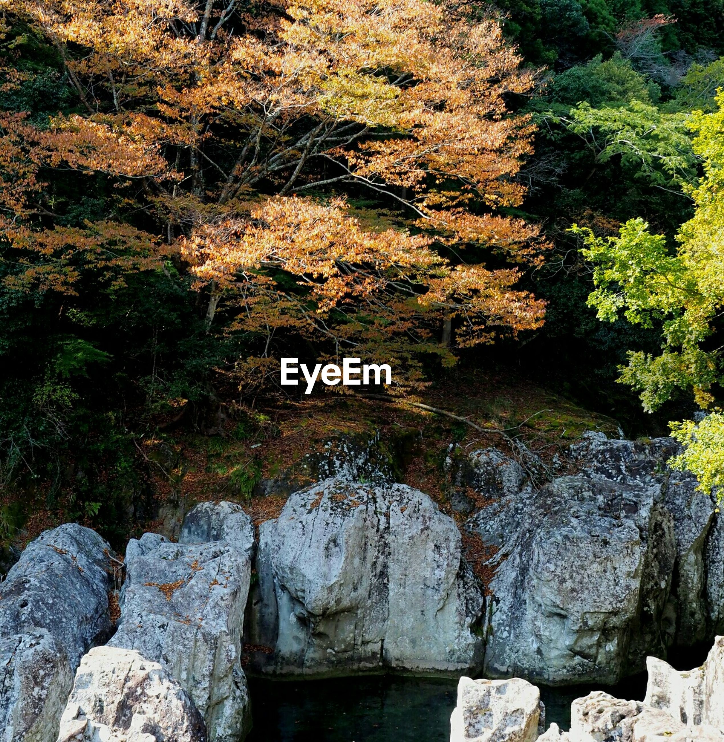 water, tree, tranquility, nature, rock - object, growth, tranquil scene, beauty in nature, plant, scenics, high angle view, reflection, river, day, outdoors, stream, forest, stone - object, green color, no people