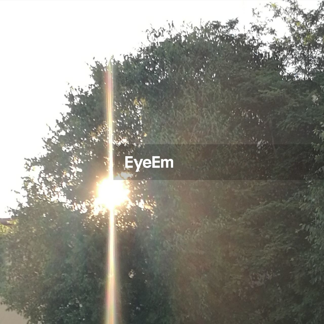 lens flare, tree, no people, outdoors, day, low angle view, sky, nature, close-up