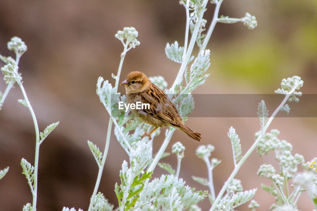 Sparrow Perching On Plant Outdoors