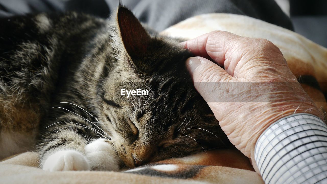 Cropped Hand Of Man Petting Cat Sleeping On Bed At Home