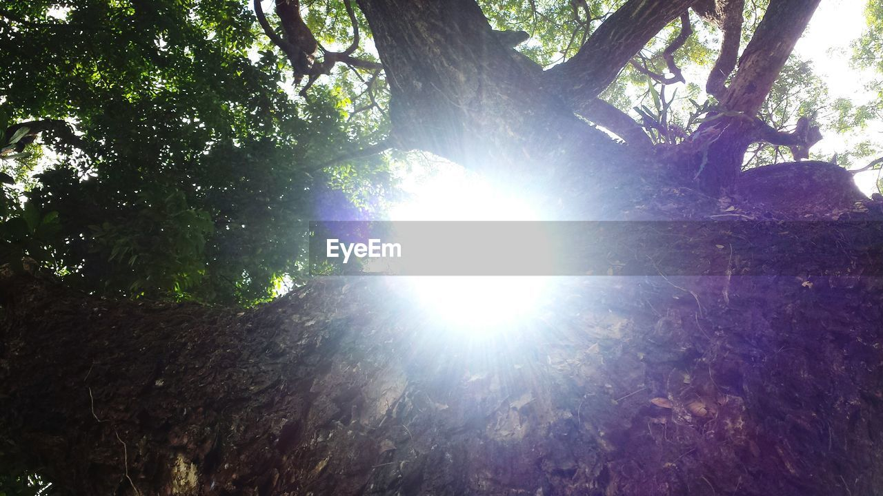 tree, nature, lens flare, forest, beauty in nature, sunbeam, tranquility, sunlight, growth, tranquil scene, no people, tree trunk, branch, low angle view, outdoors, day, scenics, freshness