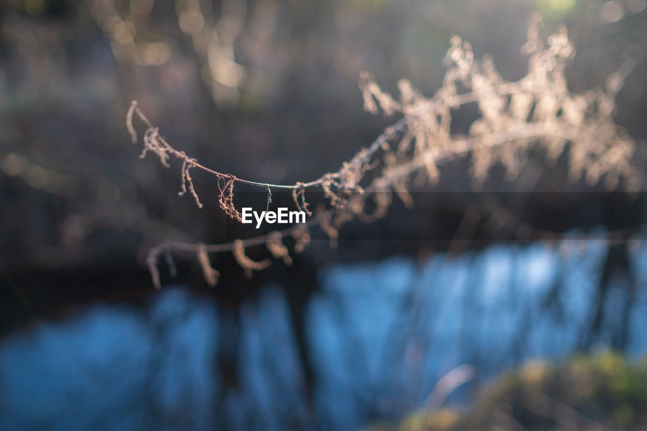 focus on foreground, close-up, tree, plant, nature, day, no people, selective focus, tranquility, beauty in nature, growth, branch, outdoors, sunlight, fragility, land, vulnerability, forest, cold temperature, pattern, coniferous tree