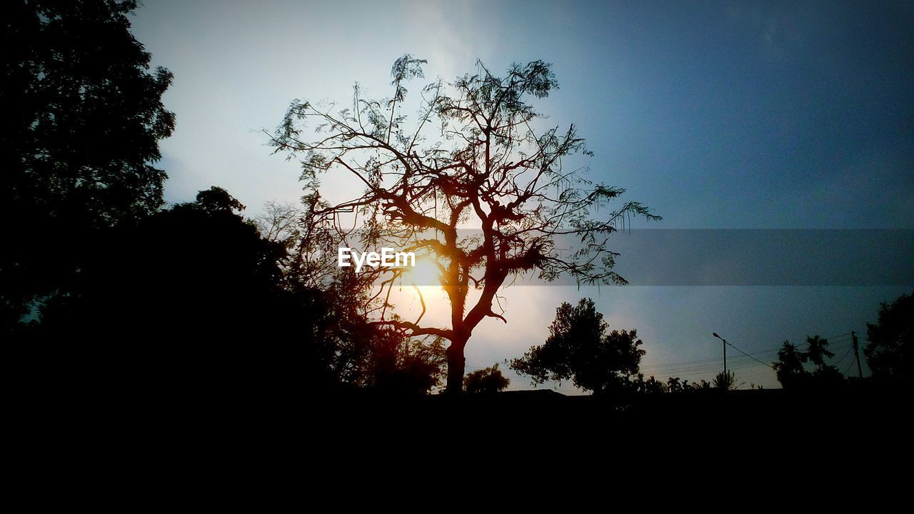 silhouette, tree, sun, sunset, nature, sky, tranquil scene, beauty in nature, sunlight, tranquility, outdoors, low angle view, scenics, growth, no people, hope, day