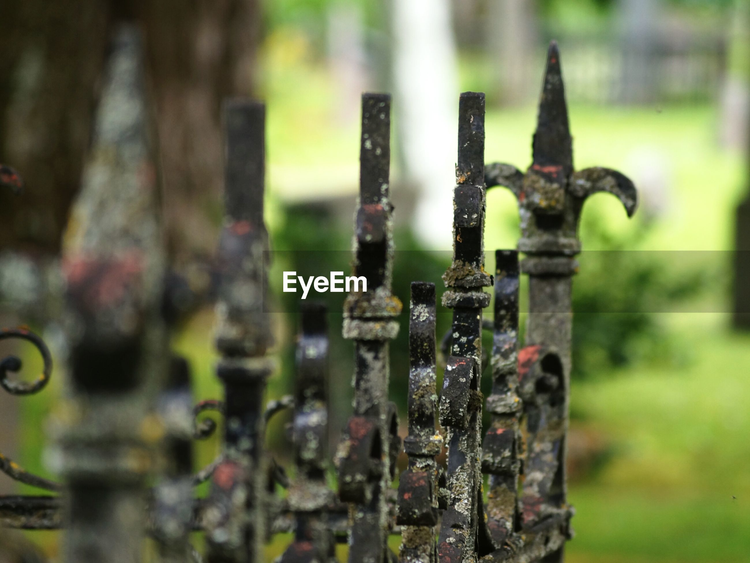 Close-up of rusty gate