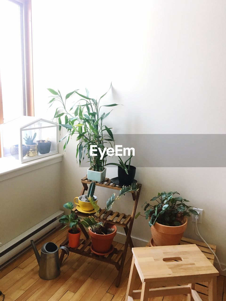 potted plant, indoors, plant, no people, home interior, table, window, growth, houseplant, nature, day, wood - material, seat, home, domestic room, absence, wall - building feature, chair, container, flower pot