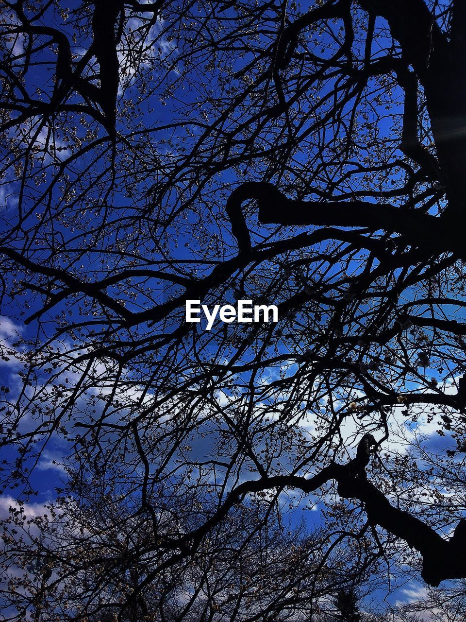 tree, silhouette, branch, low angle view, bare tree, outdoors, nature, beauty in nature, no people, day, tranquility, sky