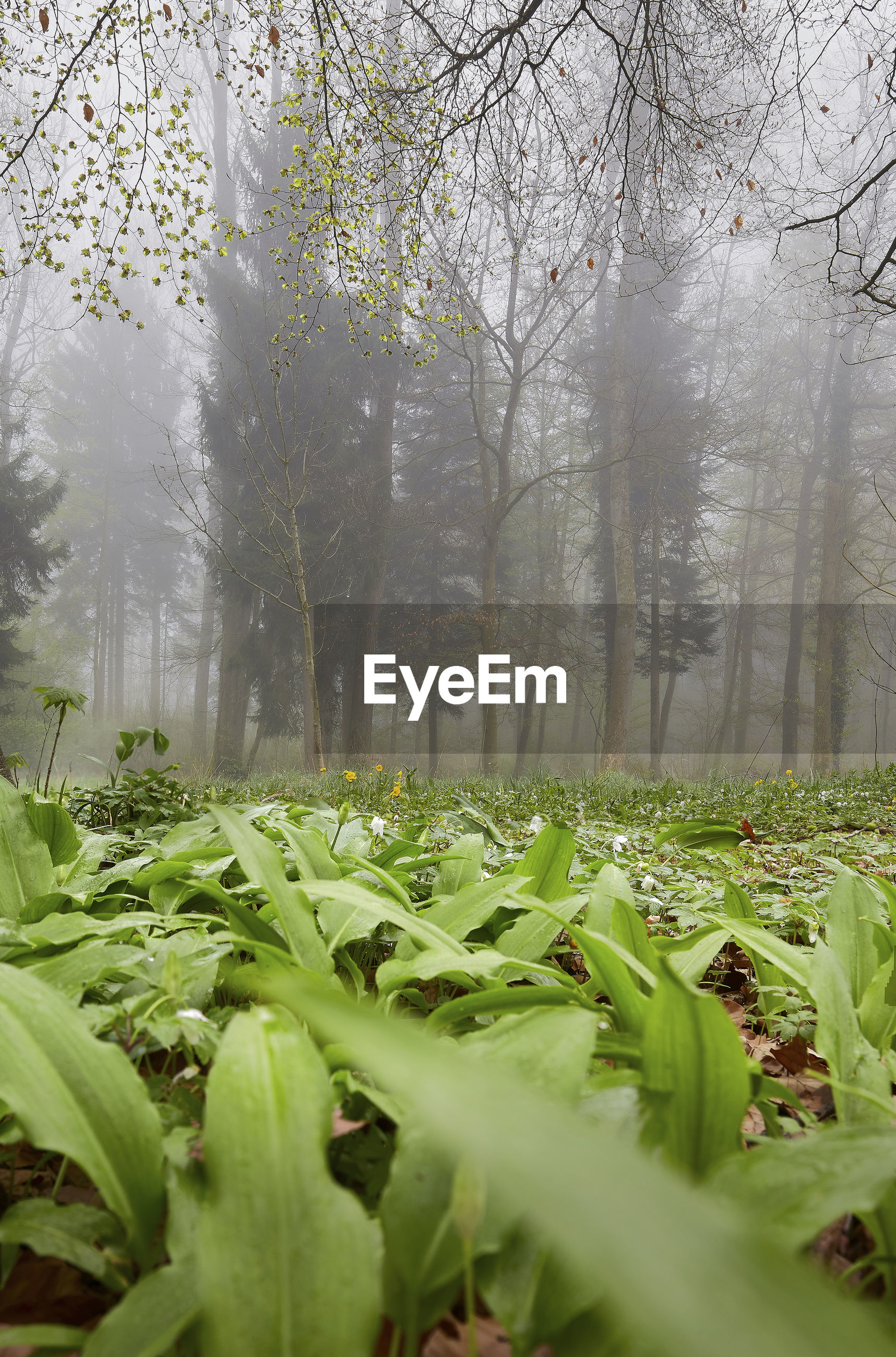 Plants and trees growing in forest during foggy weather