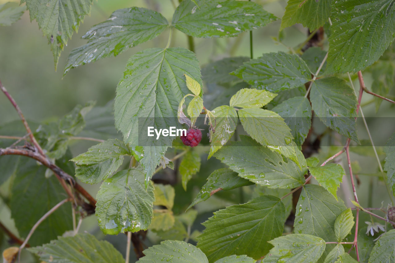 leaf, green color, growth, nature, plant, focus on foreground, outdoors, day, no people, close-up, beauty in nature, fragility, freshness