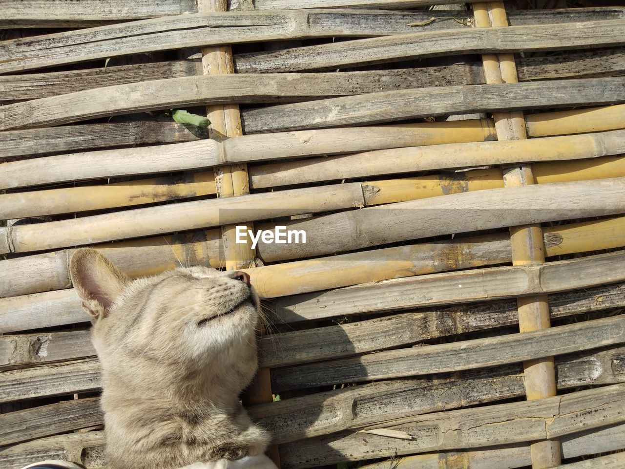 CLOSE-UP OF CAT ON WOOD OUTDOORS