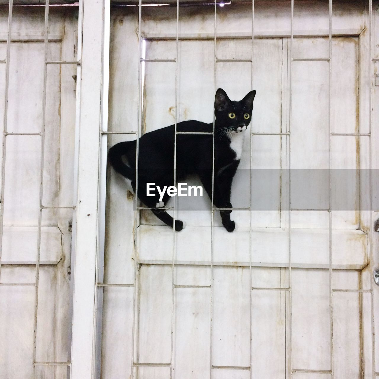 domestic, domestic animals, mammal, pets, cat, one animal, feline, domestic cat, vertebrate, black color, no people, day, sitting, wall - building feature, portrait, built structure, looking at camera, whisker