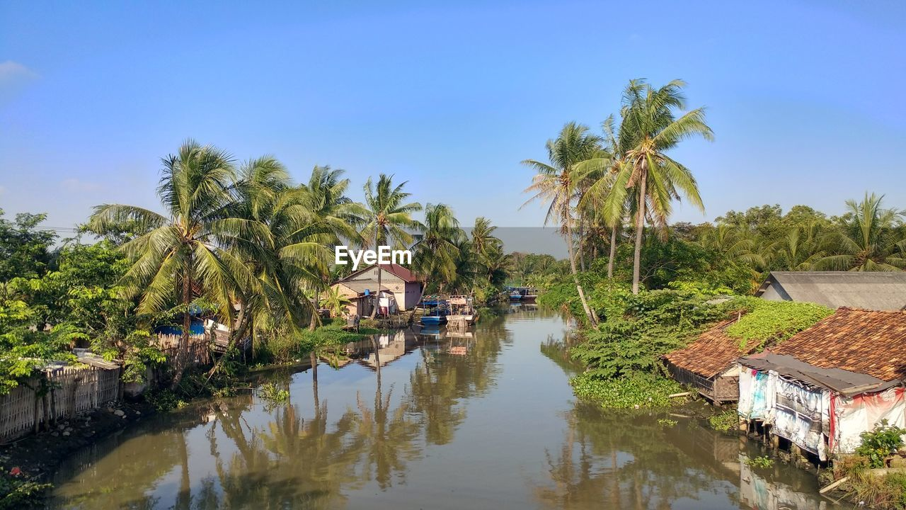 CANAL AMIDST PALM TREES AND PLANTS AGAINST SKY