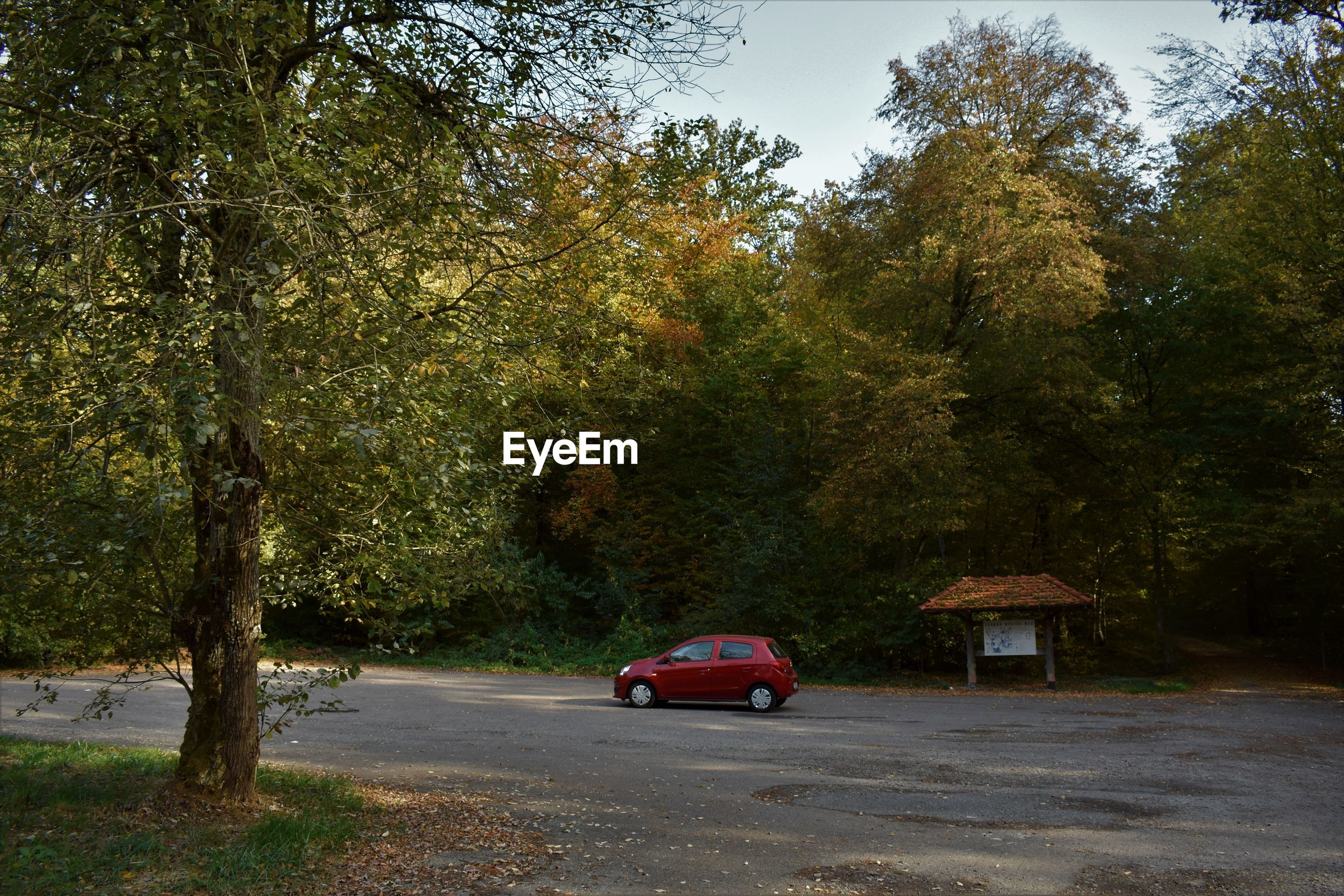 tree, plant, transportation, mode of transportation, car, motor vehicle, land vehicle, nature, road, growth, day, no people, green color, street, outdoors, city, land, the way forward, direction, autumn, change