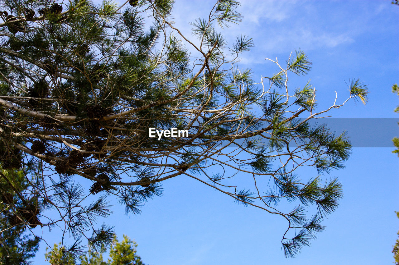 low angle view, tree, growth, nature, sky, day, outdoors, no people, clear sky, blue, branch, beauty in nature, blue sky