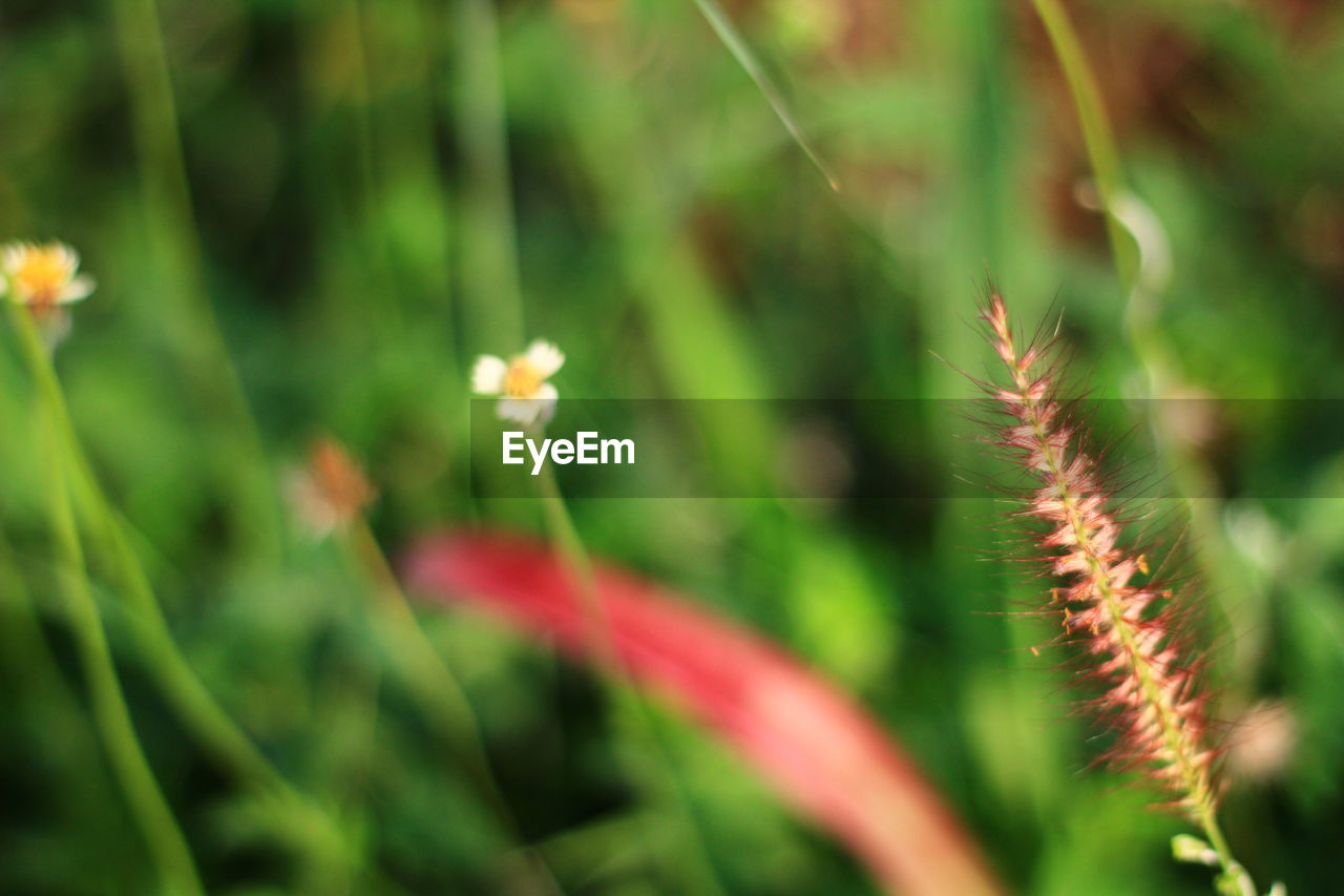 growth, nature, plant, beauty in nature, no people, outdoors, freshness, green color, day, flower, fragility, close-up, flower head