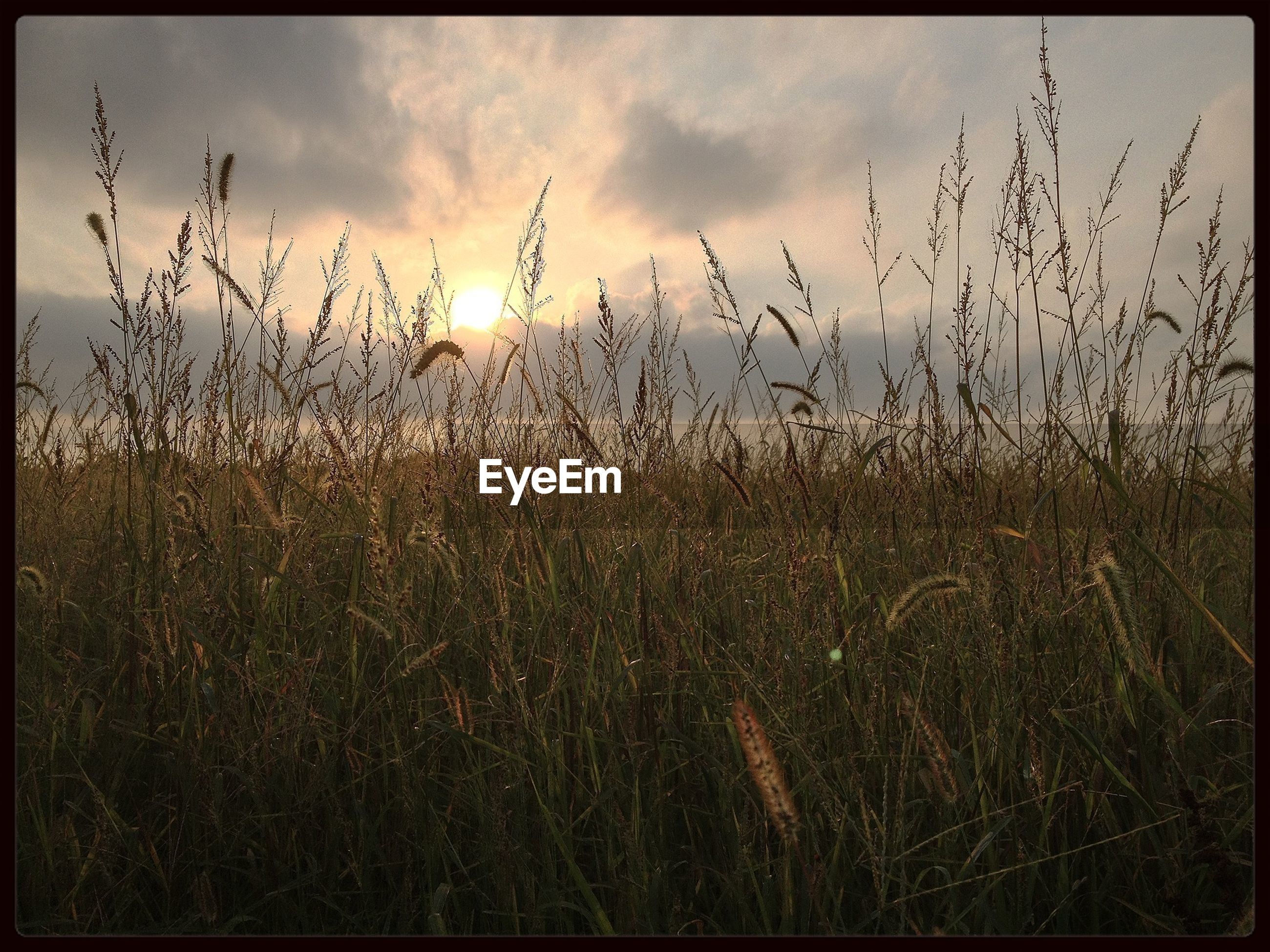 sky, field, cloud - sky, grass, sunset, tranquility, tranquil scene, transfer print, plant, sun, growth, nature, auto post production filter, beauty in nature, scenics, landscape, cloudy, cloud, sunlight, idyllic