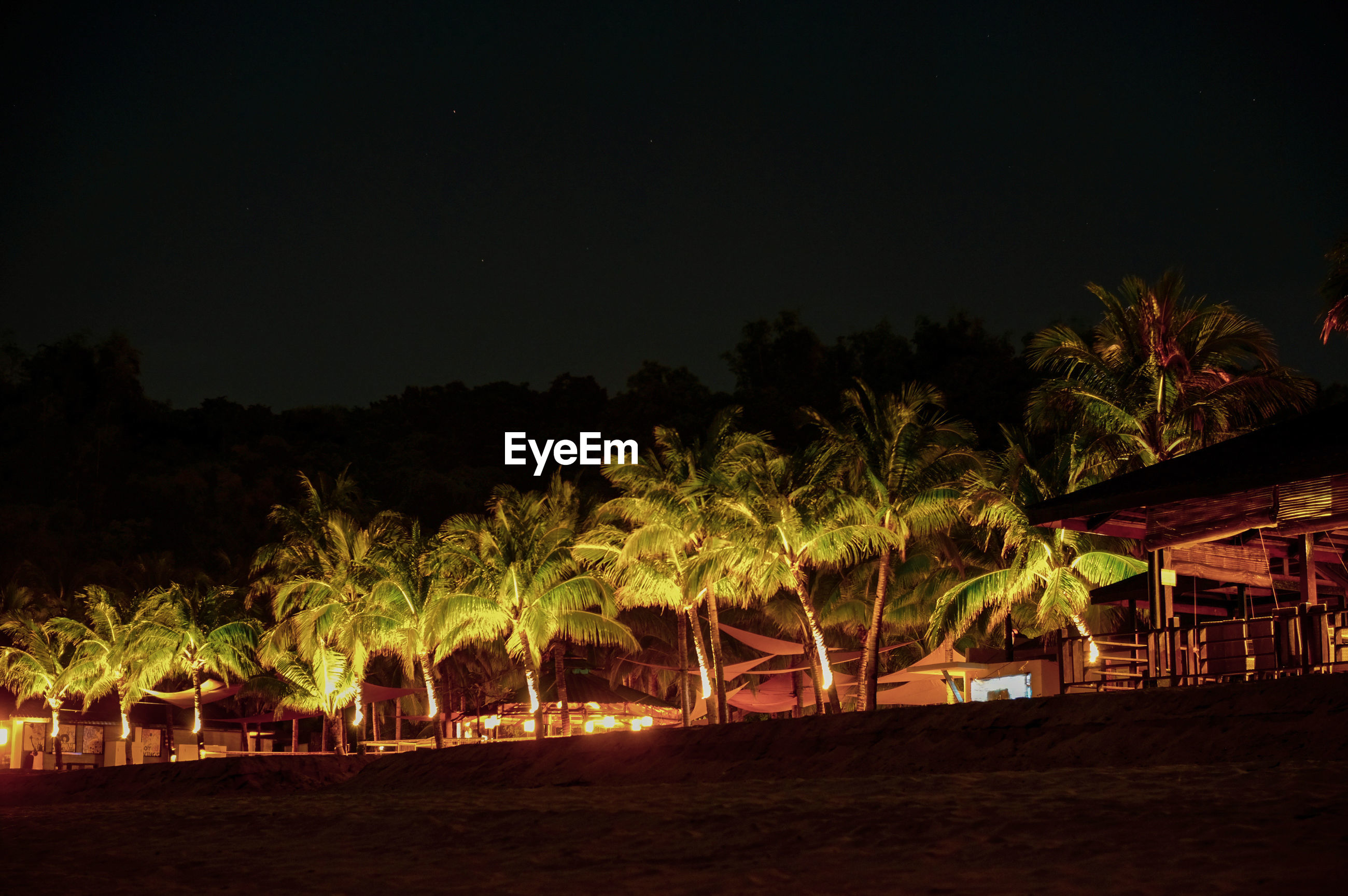 Palm trees by beach against sky at night