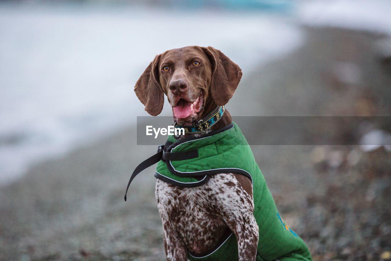 Portrait Of Dog Sitting At Beach