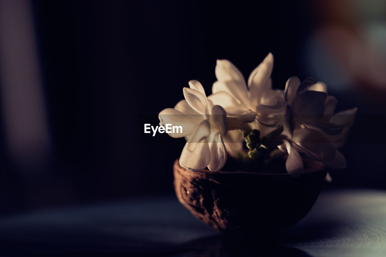 freshness, flowering plant, flower, plant, close-up, table, beauty in nature, indoors, vulnerability, nature, focus on foreground, fragility, no people, flower head, petal, selective focus, still life, inflorescence, vase, day, flower arrangement